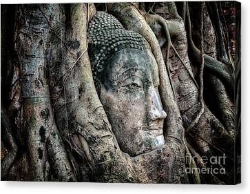 Banyan Tree Buddha Canvas Print