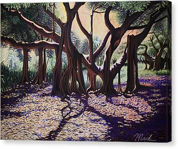 Banyan Tree On Old Cutler Road Canvas Print by Stephen Mack