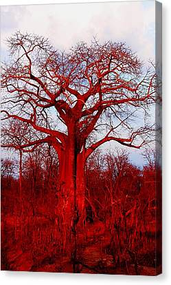 Baobab Tree 05 Canvas Print by Dora Hathazi Mendes