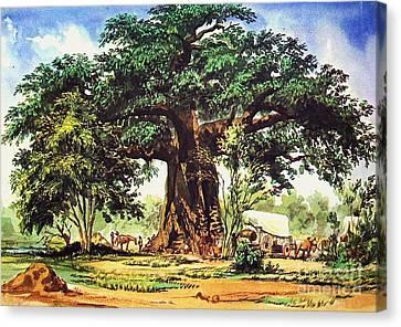 Baobab Tree - South Africa Canvas Print
