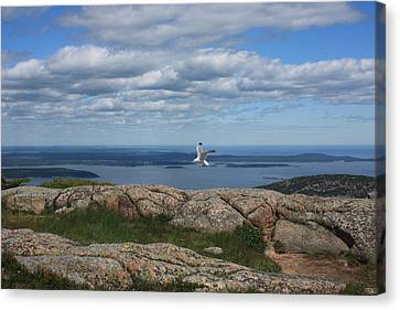 Bar Harbor View From Cadillac Canvas Print