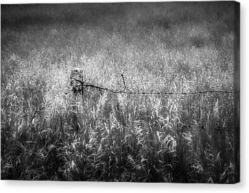 Canvas Print featuring the photograph Barb Wire Fence by Bill Wakeley