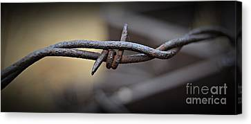 Canvas Print - Barbed Wire 2 by Chalet Roome-Rigdon