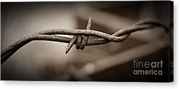 Canvas Print - Barbed Wire 2 Sepia by Chalet Roome-Rigdon