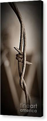 Canvas Print - Barbed Wire 3 Sepia by Chalet Roome-Rigdon