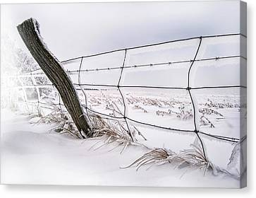 Barbed Wire And Hoar Frost Canvas Print