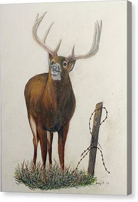 Barbed Wire Canvas Print