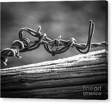 Barbed Wire Canvas Print by Inge Johnsson