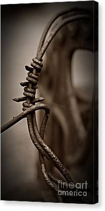 Canvas Print - Barbed Wire Sepia by Chalet Roome-Rigdon