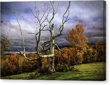 Bare Autumn Tree Canvas Print by Garry Gay