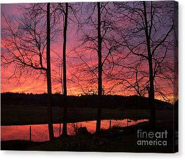 Bare Branches II Canvas Print by Cody Williamson