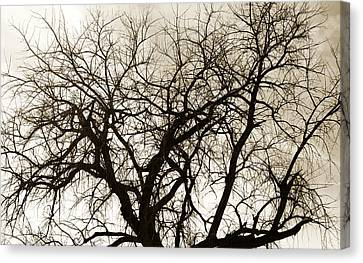 Genealogy Canvas Print - Bare Branches by Marilyn Hunt