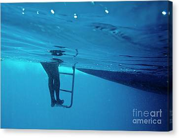 Bare Legs Descending Underwater From The Ladder Of A Boat Canvas Print by Sami Sarkis