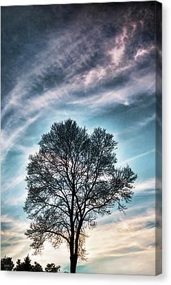 Bare Sunset Canvas Print by Dana Sohr