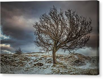 Bare Tree Against A Winter Sunset Canvas Print