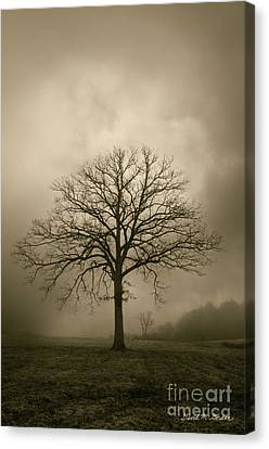 Bare Tree And Clouds  Canvas Print by Dave Gordon