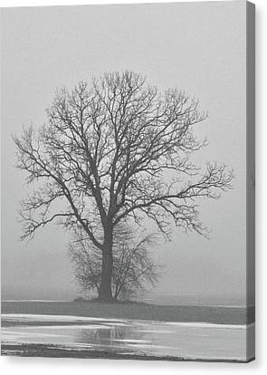 Bare Tree In Fog Canvas Print