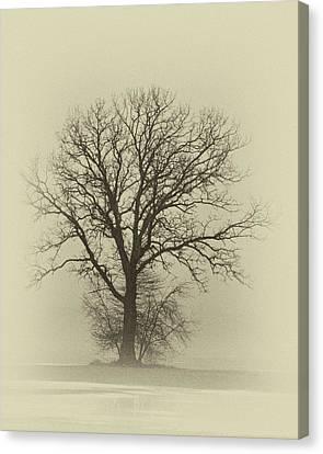 Bare Tree In Fog- Nik Filter Canvas Print by Nancy Landry
