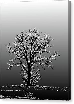 Bare Tree In Fog- Pe Filter Canvas Print by Nancy Landry