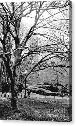 Canvas Print featuring the photograph Bare Tree On Walking Path Bw by Sandy Moulder