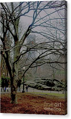 Bare Tree On Walking Path Canvas Print by Sandy Moulder