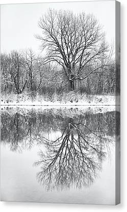 Canvas Print featuring the photograph Bare Trees by Darren White