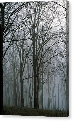 Bare Trees In Misty Forest, Finger Canvas Print