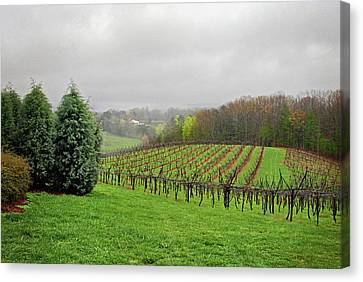 Canvas Print featuring the photograph Bare Vineyard by Robert Smith