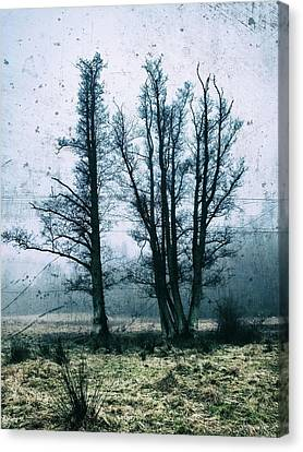 Bare Winter Trees Canvas Print