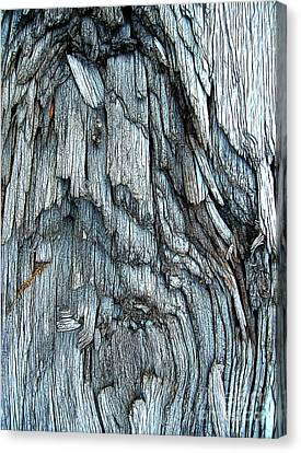 Bark Detail Canvas Print by Judi Bagwell