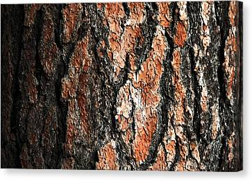 Bark Canvas Print by Todd Klassy