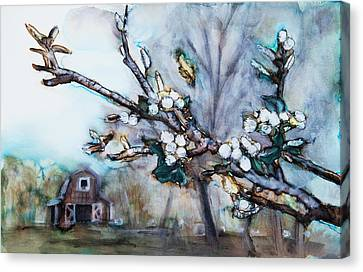 Barn And Blossoms Canvas Print by Tara Thelen