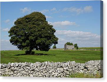 Barn And Tree Canvas Print by Steev Stamford
