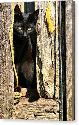 Barn Cat Canvas Print by Kristin Elmquist