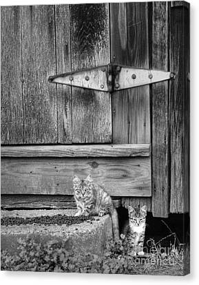 Canvas Print featuring the photograph Barn Cats by Pete Hellmann