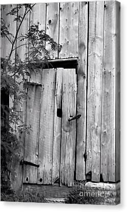 Barn Door With Tree Canvas Print by Kristi Beers-Mason