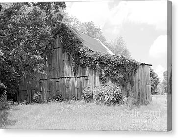 Barn In Kentucky No 67 Canvas Print by Dwight Cook