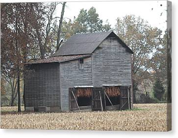 Barn In Kentucky No 99 Canvas Print by Dwight Cook