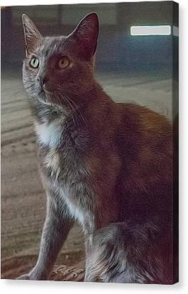 Barn Kitty Canvas Print by Guy Whiteley