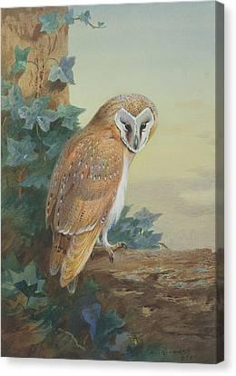 Barn Owl Canvas Print by Archibald Thorburn