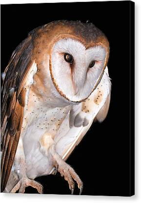 Barn Owl Canvas Print by Jean Noren