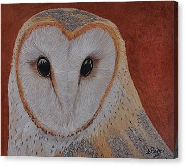 Canvas Print featuring the drawing Barn Owl by Jo Baner
