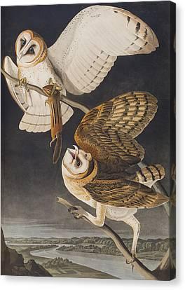 Barn Owl Canvas Print by John James Audubon