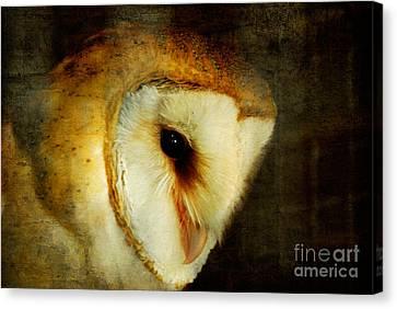 Barn Owl Canvas Print by Lois Bryan