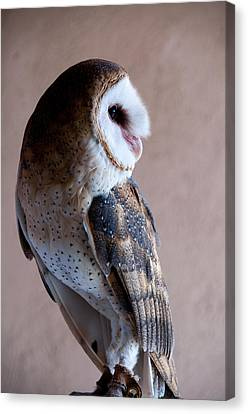 Canvas Print featuring the photograph Barn Owl by Monte Stevens