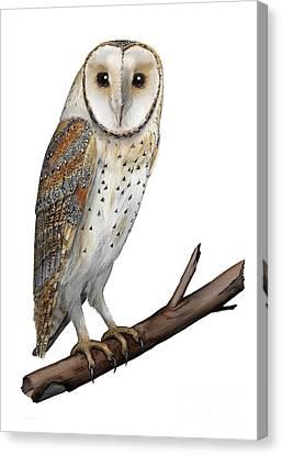 Barn Owl Screech Owl Tyto Alba - Effraie Des Clochers- Lechuza Comun- Tornuggla - Nationalpark Eifel Canvas Print by Urft Valley Art