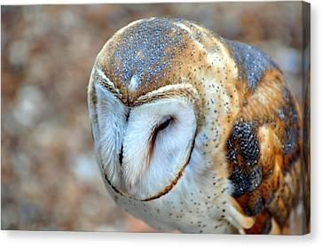 Barn Owle 1 Canvas Print by Marty Koch