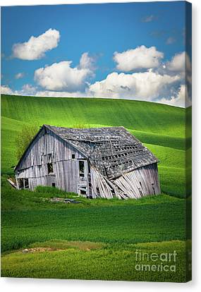 Barn Ruin Canvas Print by Inge Johnsson