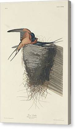 Barn Swallow Canvas Print - Barn Swallow by Dreyer Wildlife Print Collections