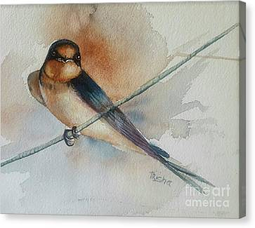 Barn Swallow Canvas Print - Barn Swallow by Patricia Pushaw